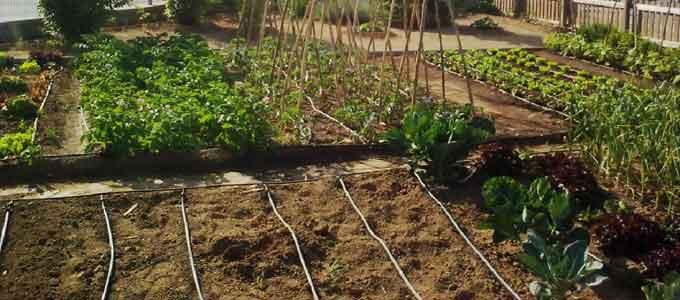 Riego - Sistema de riego automatico para jardin ...
