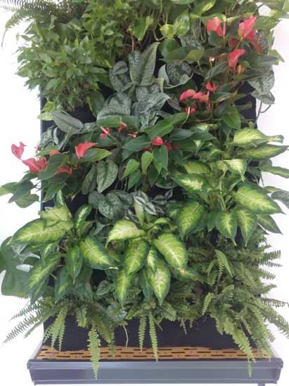 Jardines verticales para plantas de interior for Cuales son las plantas para interiores